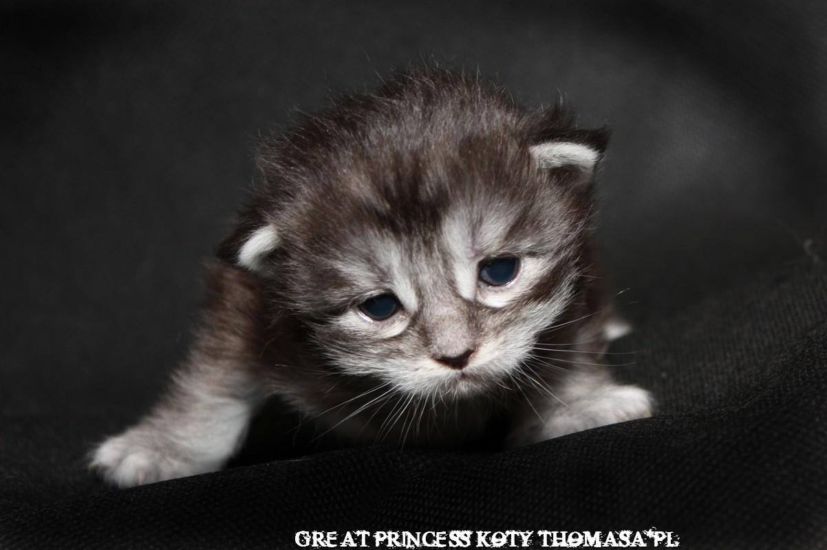princess14dni.jpg