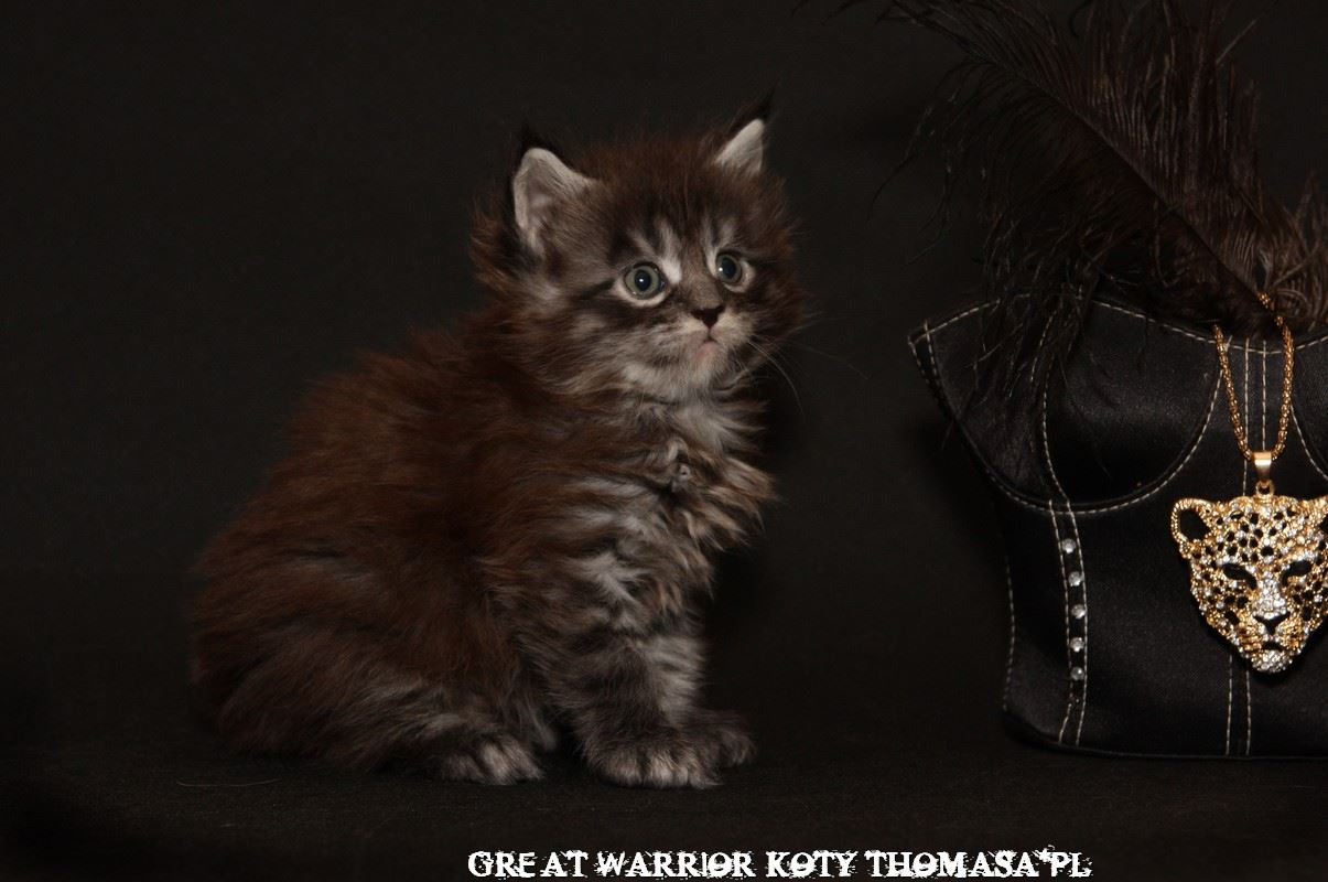 warrior112.jpg
