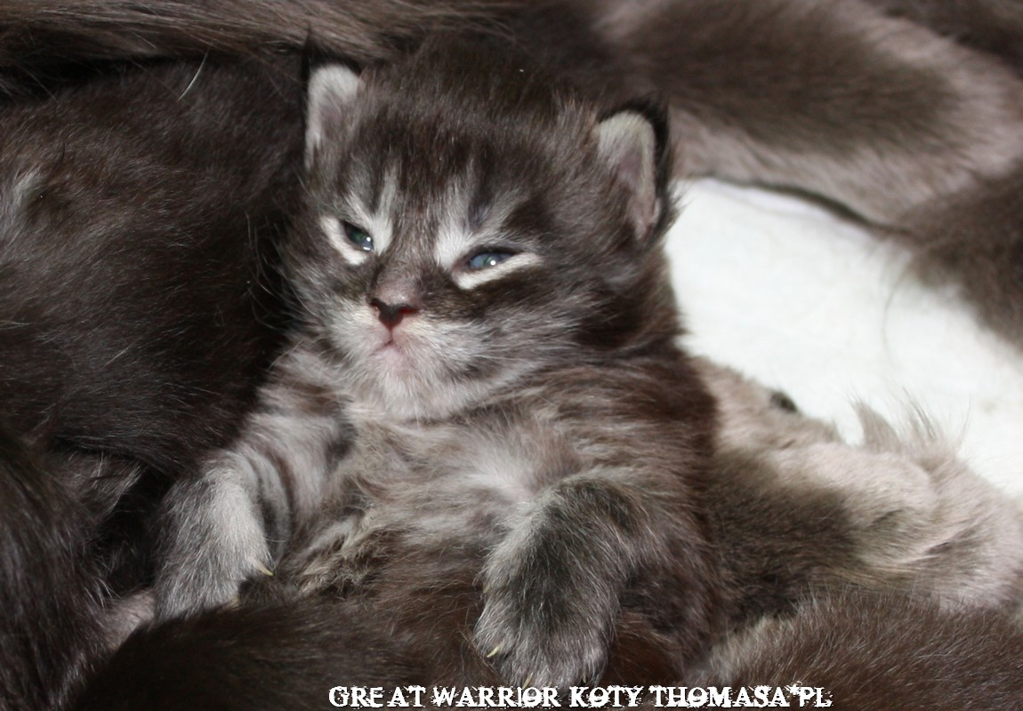 warrior15dni.jpg